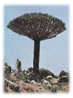British Empire and Socotra